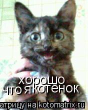 Котоматрица: хорошо что я котёнок