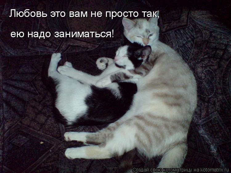 Котоматрица: Любовь это вам не просто так,  ею надо заниматься!