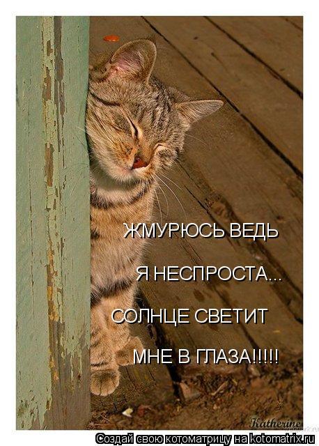 Котоматрица: ЖМУРЮСЬ ВЕДЬ  Я НЕСПРОСТА... СОЛНЦЕ СВЕТИТ МНЕ В ГЛАЗА!!!!!