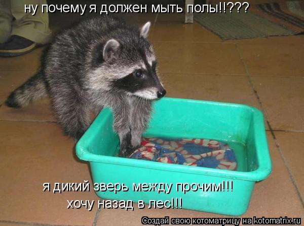 Котоматрица: ну почему я должен мыть полы!!??? я дикий зверь между прочим!!! хочу назад в лес!!!