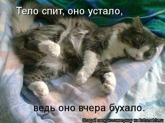 Котоматрица: Тело спит, оно устало,  ведь оно вчера бухало.