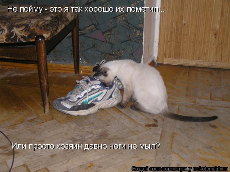 Котоматрица: Не пойму - это я так хорошо их пометил... Или просто хозяин давно ноги не мыл?