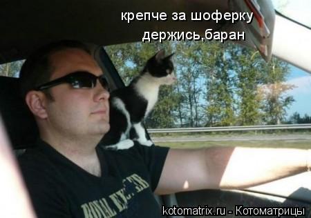 Котоматрица: крепче за шоферку держись,баран