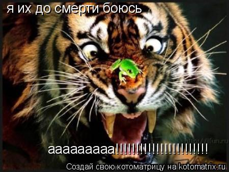 Котоматрица: ааааааааа!!!!!!!!!!!!!!!!!!!!!!! ааааааааа!!!!!!!!!!!!!!!!!!!!!!! я их до смерти боюсь