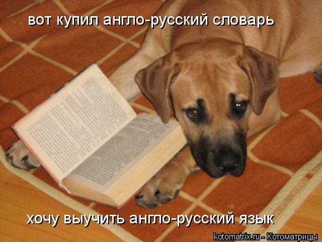 Котоматрица: хочу выучить англо-русский язык вот купил англо-русский словарь