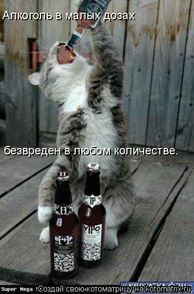 Котоматрица: Алкоголь в малых дозах  безвреден в любом количестве.