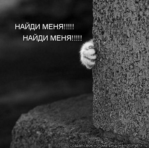 Котоматрица: НАЙДИ МЕНЯ!!!!! НАЙДИ МЕНЯ!!!!!