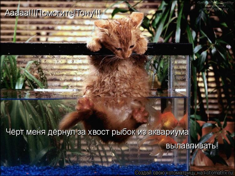 Котоматрица: Ааааа!!!Помогите!Тону!!! Чёрт меня дёрнул за хвост рыбок из аквариума вылавливать!