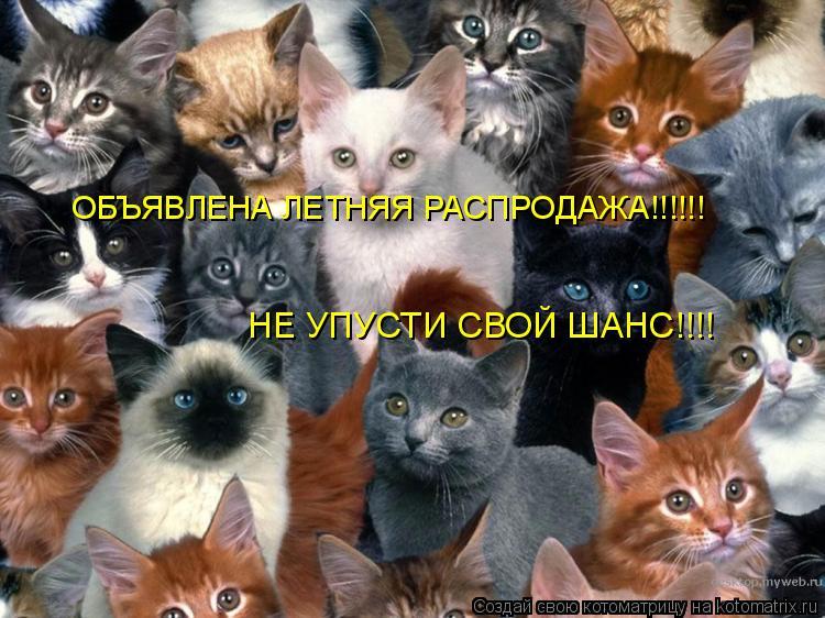 Котоматрица: ОБЪЯВЛЕНА ЛЕТНЯЯ РАСПРОДАЖА!!!!!! НЕ УПУСТИ СВОЙ ШАНС!!!!