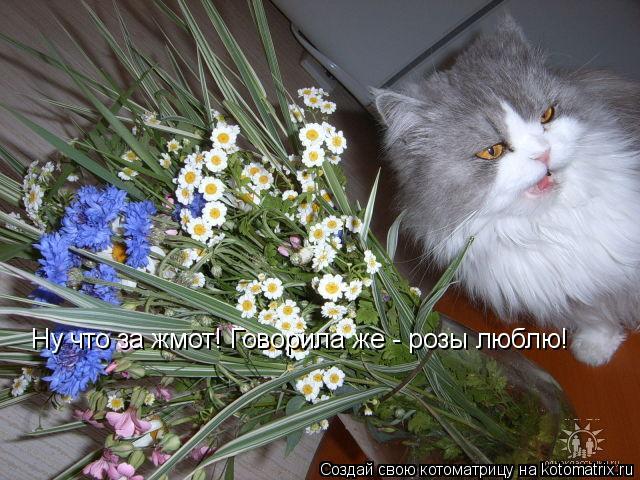 Котоматрица: Ну что за жмот! Говорила же - розы люблю!