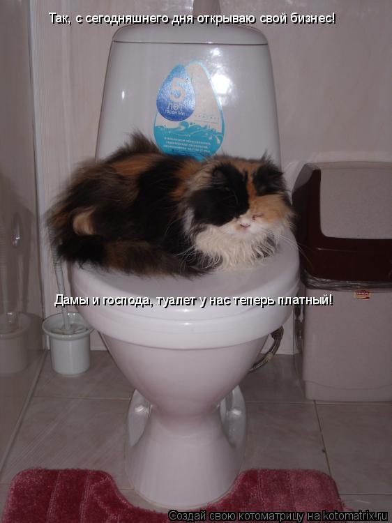 Котоматрица: Так, с сегодняшнего дня открываю свой бизнес! Дамы и господа, туалет у нас теперь платный!