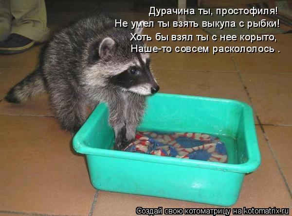 Котоматрица: «Дурачина ты, простофиля! Не умел ты взять выкупа с рыбки! Хоть бы взял ты с нее корыто, Наше-то совсем раскололось».
