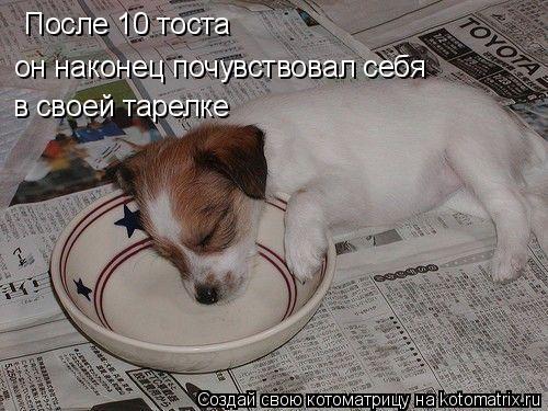 Котоматрица: После 10 тоста  он наконец почувствовал себя  в своей тарелке
