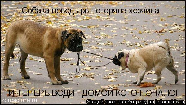 Котоматрица: Собака поводырь потеряла хозяина... И ТЕПЕРЬ ВОДИТ ДОМОЙ КОГО ПОПАЛО!