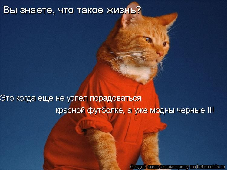 Котоматрица: Вы знаете, что такое жизнь?  Это когда еще не успел порадоваться  красной футболке, а уже модны черные !!!