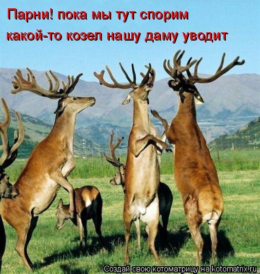 Котоматрица: Парни! пока мы тут спорим какой-то козел нашу даму уводит