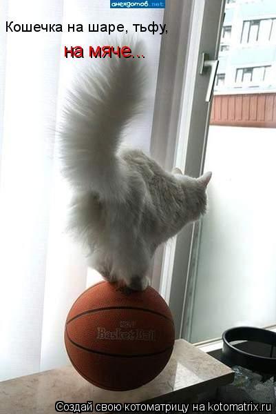 Котоматрица: Кошечка на шаре, тьфу,  на мяче...