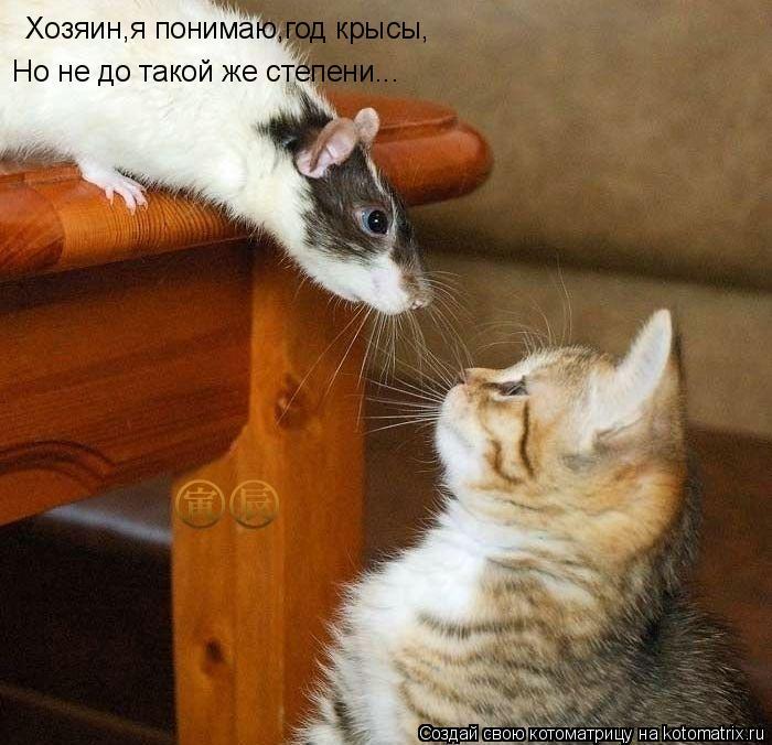 Котоматрица: Хозяин,я понимаю,год крысы, Но не до такой же степени...