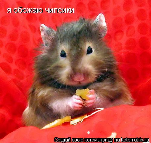 Котоматрица: я обожаю чипсики