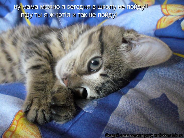 Котоматрица: ну мама можно я сегодня в школу не пойду!! пфу ты я ж кот!я и так не пойду!