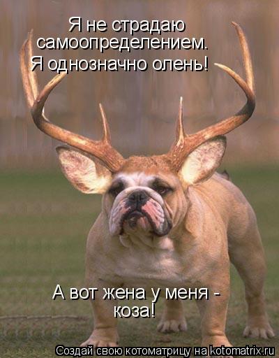 Котоматрица: Я не страдаю самоопределением.  Я однозначно олень! А вот жена у меня -  коза!
