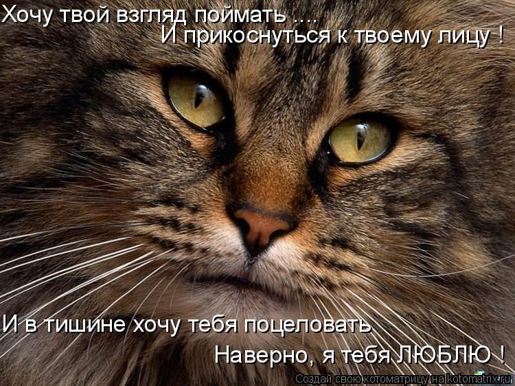 Котоматрица: Хочу твой взгляд поймать .... И прикоснуться к твоему лицу ! И в тишине хочу тебя поцеловать  Наверно, я тебя ЛЮБЛЮ !