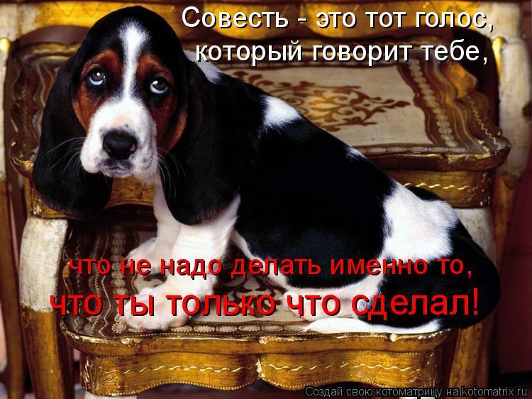Котоматрица: Совесть - это тот голос,  который говорит тебе,  что не надо делать именно то,  что ты только что сделал!