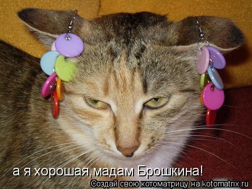 Котоматрица: а я хорошая,мадам Брошкина!