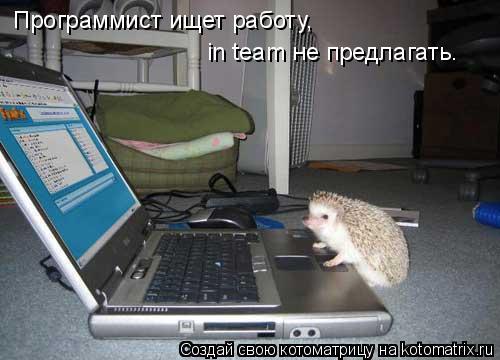 Котоматрица: Программист ищет работу,  in team не предлагать.