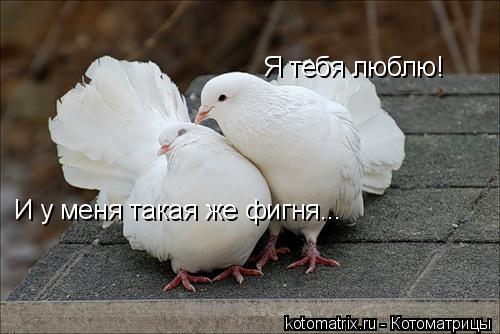 Котоматрица: Я тебя люблю! И у меня такая же фигня...