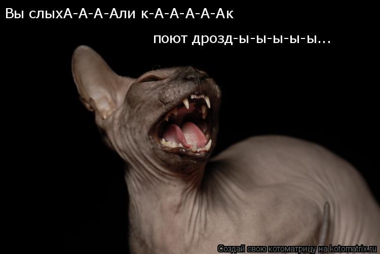 Котоматрица: Вы слыхА-А-А-Али к-А-А-А-А-Ак  поют дрозд-ы-ы-ы-ы-ы...
