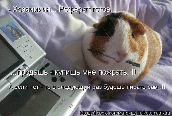 Котоматрица: - Хозяиииин... Реферат готов... ...продашь - купишь мне пожрать..!! А если нет - то в следующий раз будешь писать сам..!!
