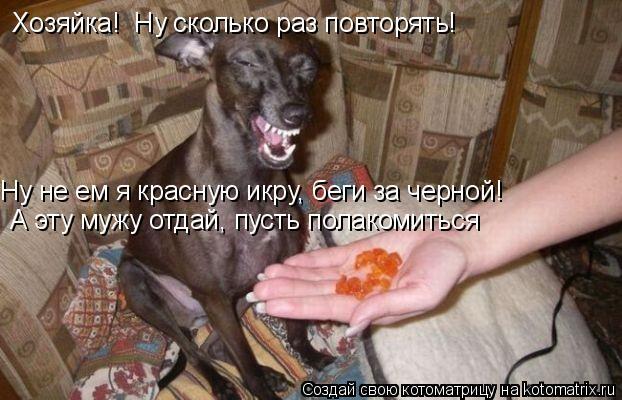 Котоматрица: Хозяйка!  Ну сколько раз повторять! Ну не ем я красную икру, беги за черной! А эту мужу отдай, пусть полакомиться