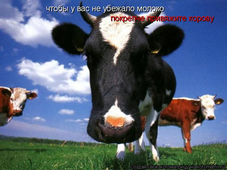 Котоматрица: чтобы у вас не убежало молоко покрепче привяжите корову