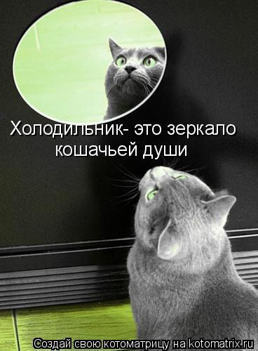 Котоматрица: Холодильник- это зеркало кошачьей души