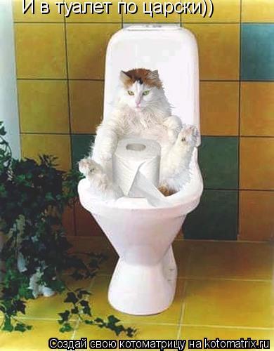 Котоматрица: И в туалет по царски))