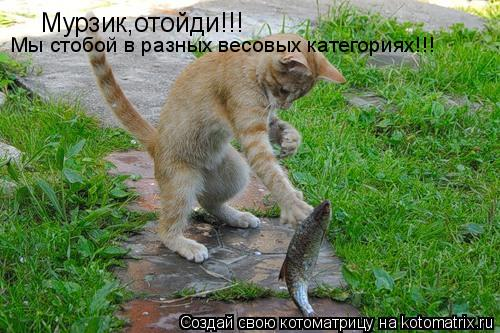 Котоматрица: Мурзик,отойди!!! Мы стобой в разных весовых категориях!!!
