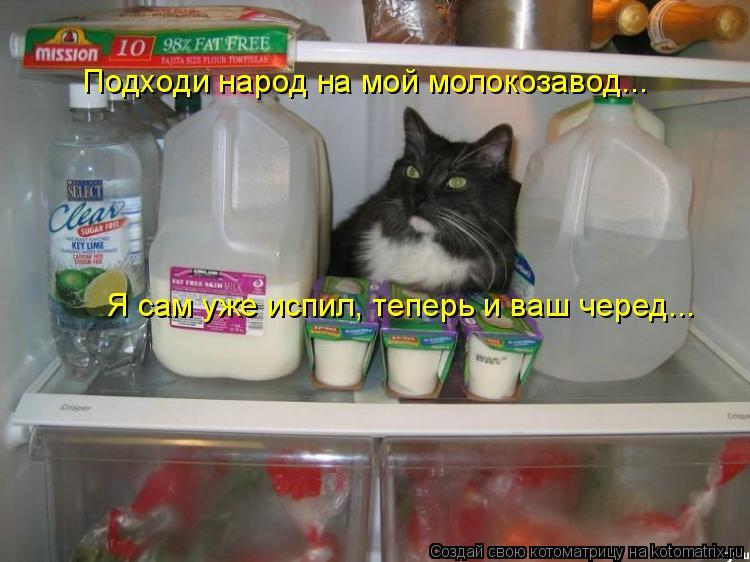 Котоматрица: Я сам уже испил, теперь и ваш черед... Подходи народ на мой молокозавод...