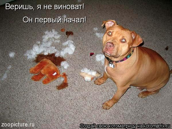 Котоматрица: Веришь, я не виноват!  Он первый начал!