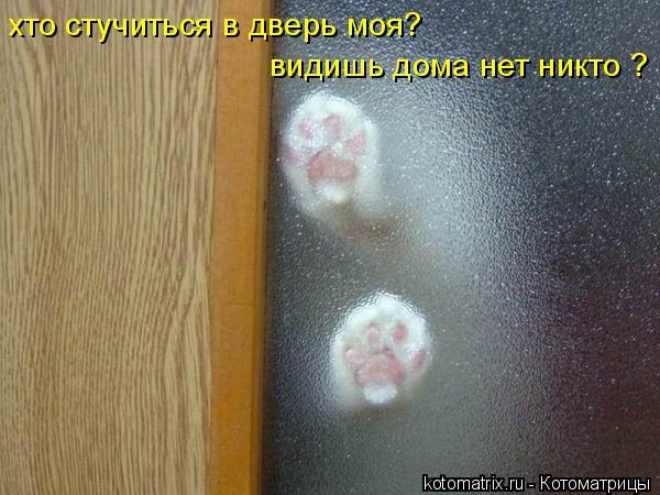 Котоматрица: хто стучиться в дверь моя? видишь дома нет никто ?