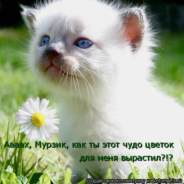 Котоматрица: Аааах, Мурзик, как ты этот чудо цветок для меня вырастил?!?