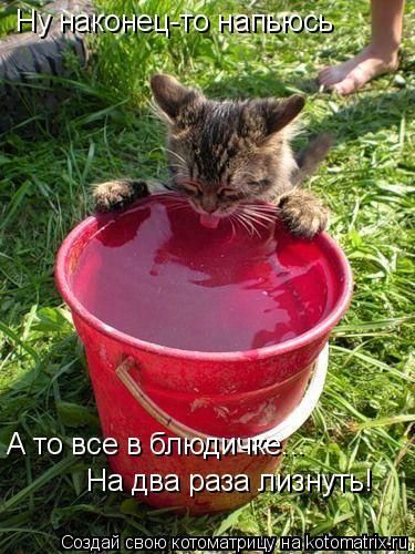 Котоматрица: Ну наконец-то напьюсь А то все в блюдичке... На два раза лизнуть!
