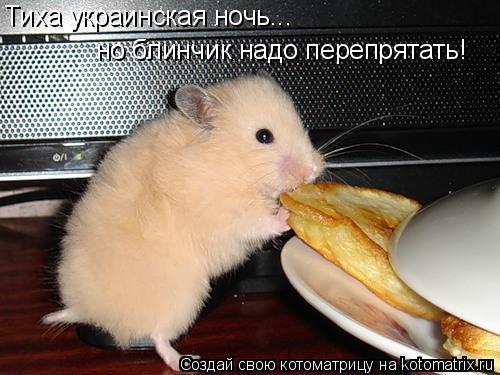 Котоматрица: Тиха украинская ночь... но блинчик надо перепрятать!