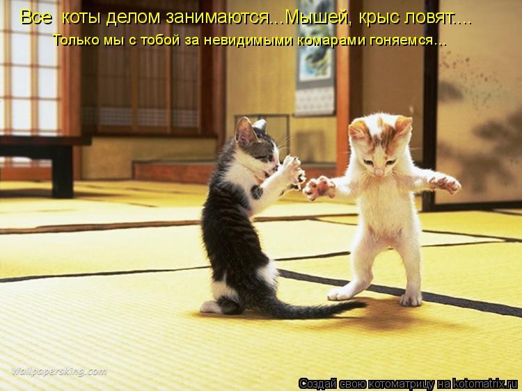 Котоматрица: Все  коты делом занимаются...Мышей, крыс ловят.... Только мы с тобой за невидимыми комарами гоняемся...