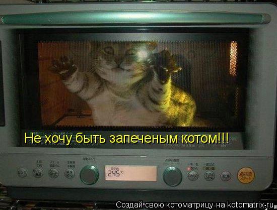Котоматрица: Не хочу быть запеченым котом!!!