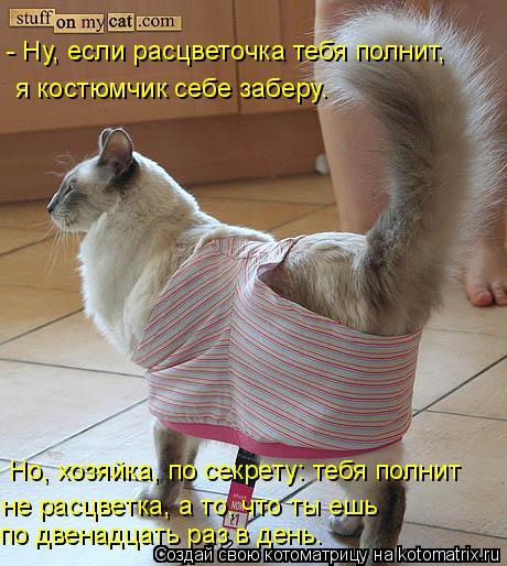 Котоматрица: - Ну, если расцветочка тебя полнит, я костюмчик себе заберу. Но, хозяйка, по секрету: тебя полнит не расцветка, а то, что ты ешь по двенадцать р