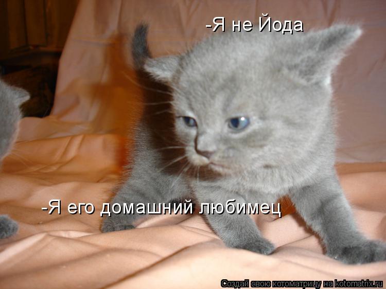 Котоматрица: -Я не Йода  -Я его домашний любимец