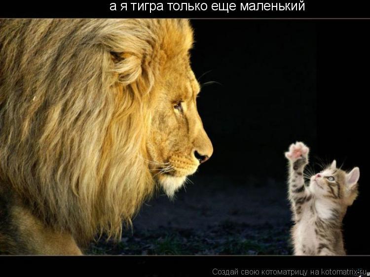 Котоматрица: а я тигра только еще маленький