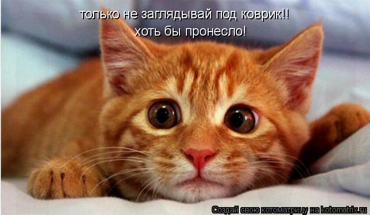Котоматрица: только не заглядывай под коврик!! хоть бы пронесло!