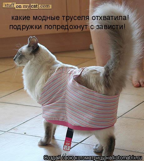 Котоматрица: какие модные труселя отхватила! подружки попредохнут с зависти!